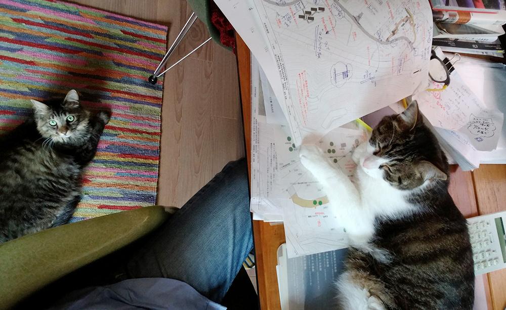 猫が住む建築士事務所