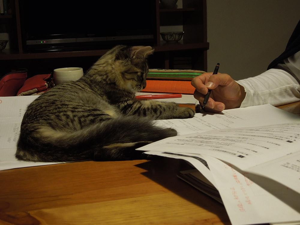 猫と建築士